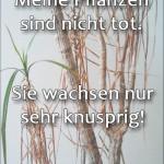 Meine Pflanzen sind nicht tot. Sie wachsen nur sehr knusprig!
